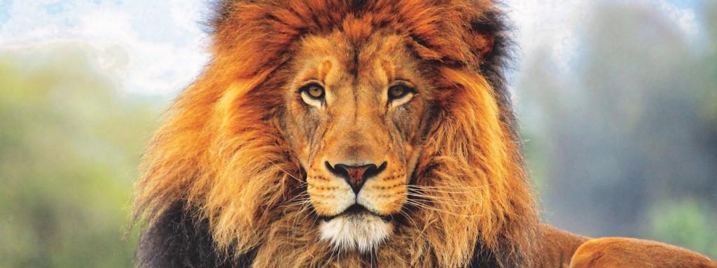 authenticiteit-leeuw